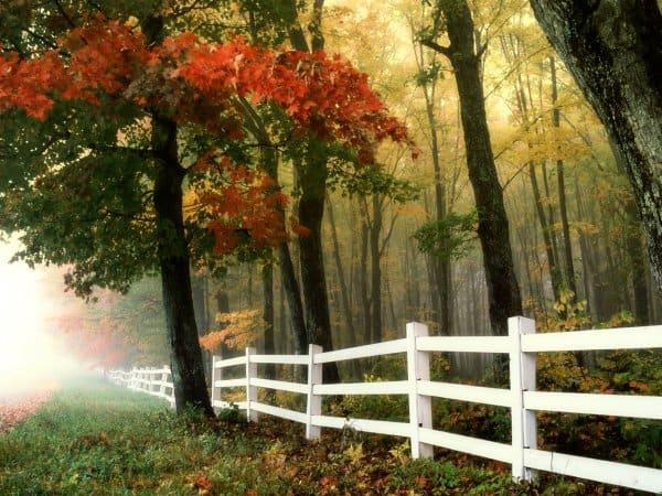 fall-tree-fence