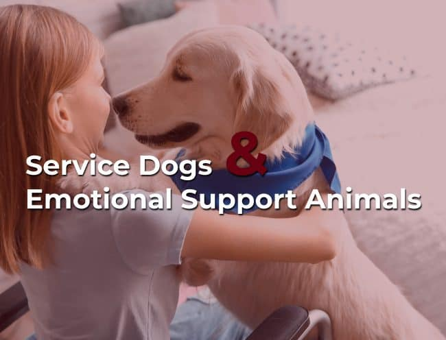 service dog and emotional support animals