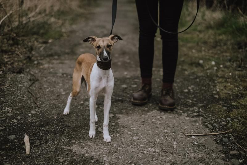 Understanding Michigan Dog Bite and Leash Laws