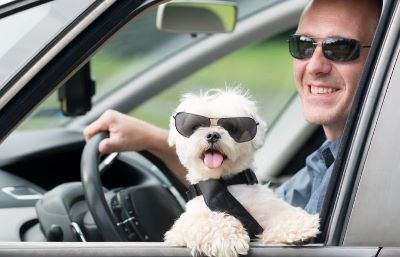 Letting A Dog On Your Lap While Driving May Soon Be Illegal