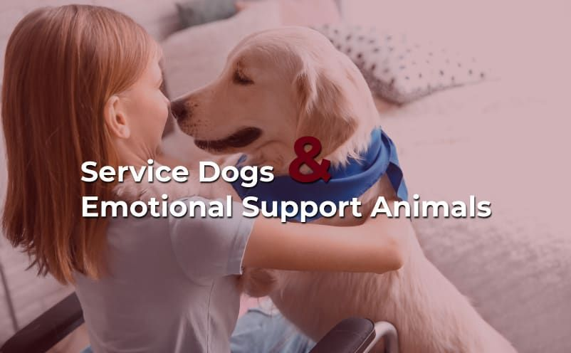 Differences Between Service Dogs and Emotional Support Animals