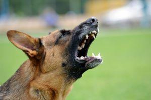 michigan-dog-bite