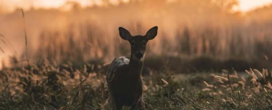 Michigan Deer Hunting Season 2018 – Regulations and Dangers
