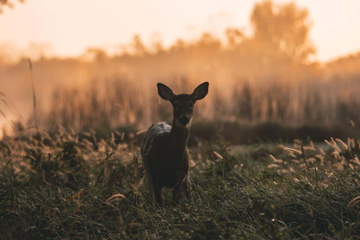 Michigan Deer Hunting Season - Regulations and Dangers Personal Injury Law Firm